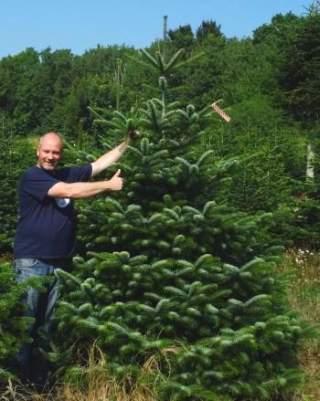 Weihnachtsbaum kaufen in berlin steglitz